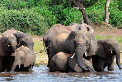 Rayo habría matado a 18 elefantes en India