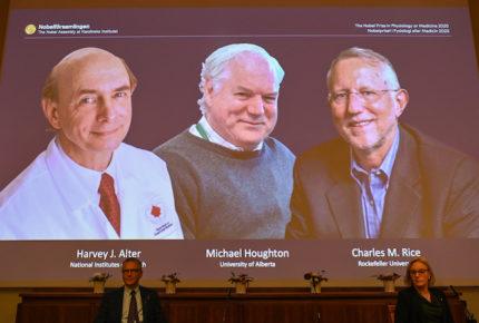 Nobel de Medicina para los descubridores de la Hepatitis C