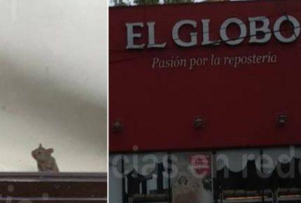 ¿Chefcito? Captan a rata en pastelería de Puebla