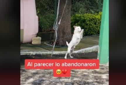 Tiktoker salva a un perrito del abandono