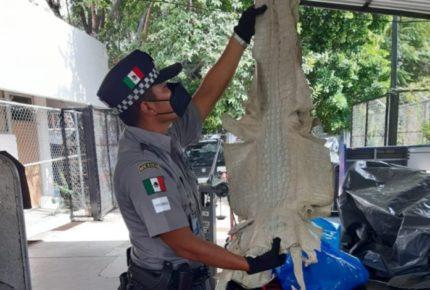 Operativo de la Interpol termina con más de 45 mil especies rescatadas